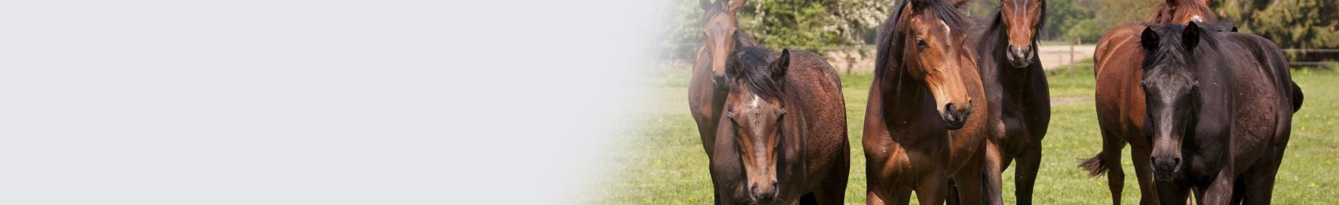KeyVisual-Pferde_1